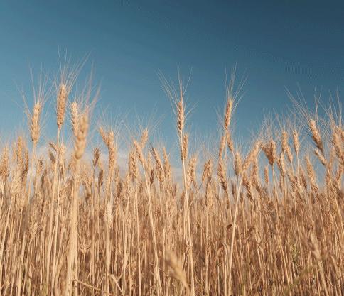 ثبت برند محصولات کشاورزی