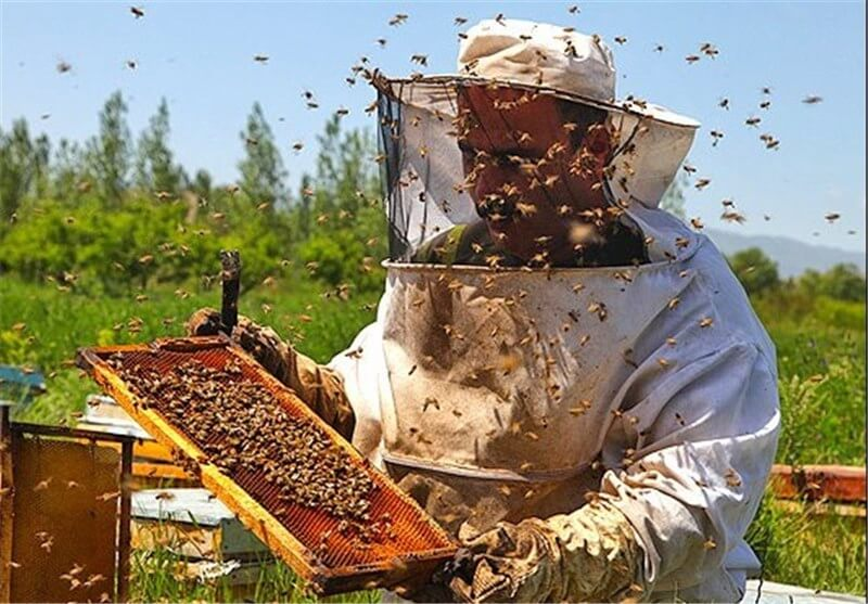 شناسنامه زنبورداری