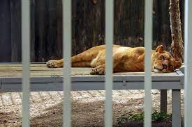 مجوز تاسیس باغ وحش