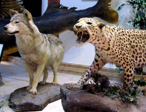 مجوز تاسیس نمایشگاه حیات وحش