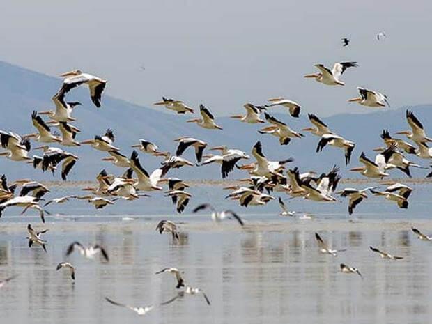 مجوز شکار پرندگان وحشی