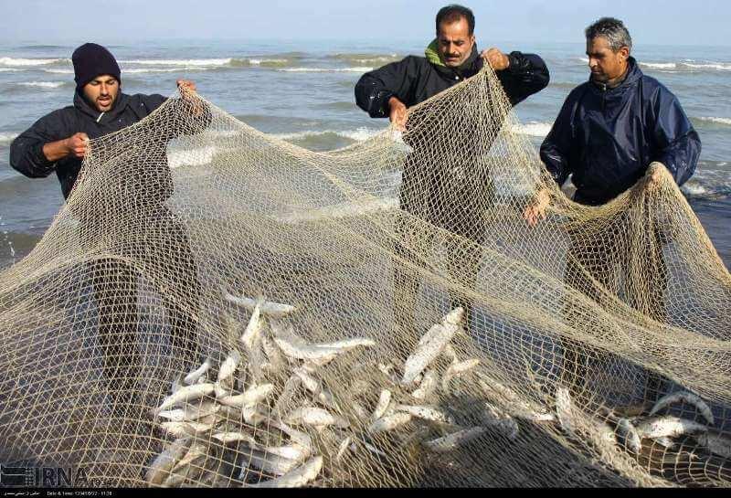 مجوز صید ماهی با تور